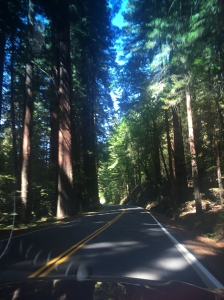 Avenue of the Giants in the Redwood Forest